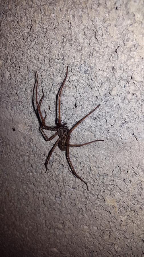 Araña grande en una pared vieja blanca imagenes de archivo