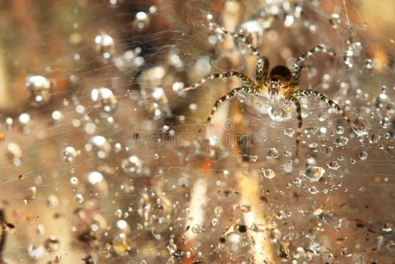 Araña macra en el web imágenes de archivo libres de regalías
