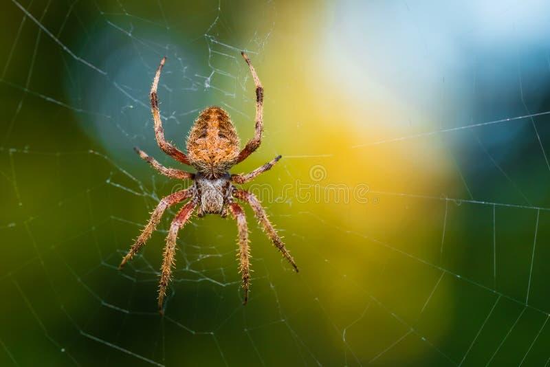 Araña melenuda imagen de archivo libre de regalías
