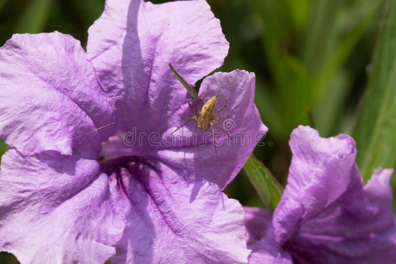 Araña púrpura de la flor con el spiderweb fotos de archivo libres de regalías
