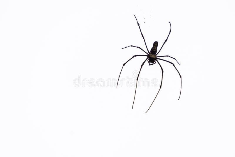 Araña que cuelga del cielo fotografía de archivo