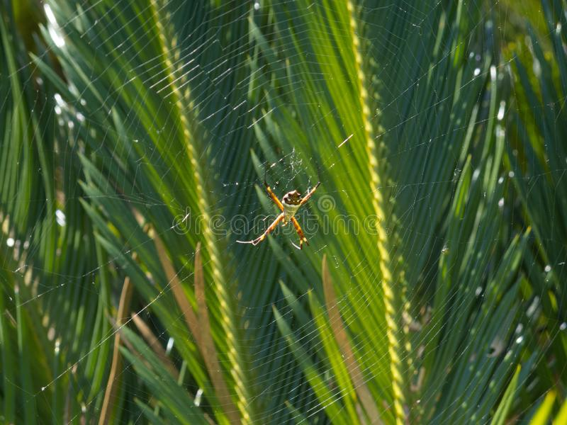 Araña que descansa en el centro de la web imágenes de archivo libres de regalías