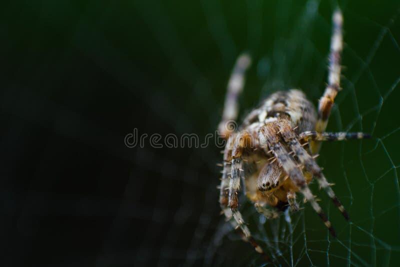 Araña que espera en el web fotografía de archivo libre de regalías