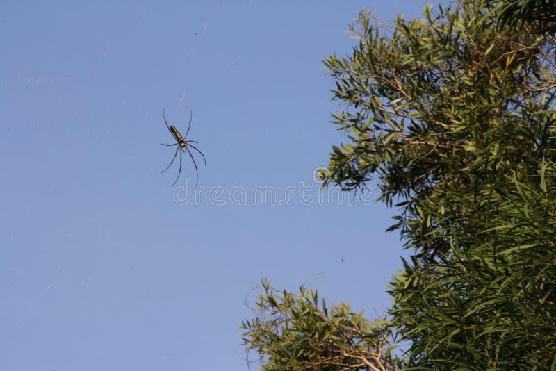 Araña que se arrastra en el cielo fotografía de archivo libre de regalías