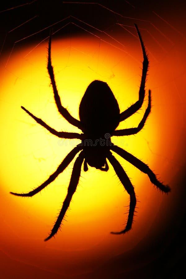 Araña silueteada en la puesta del sol imagenes de archivo