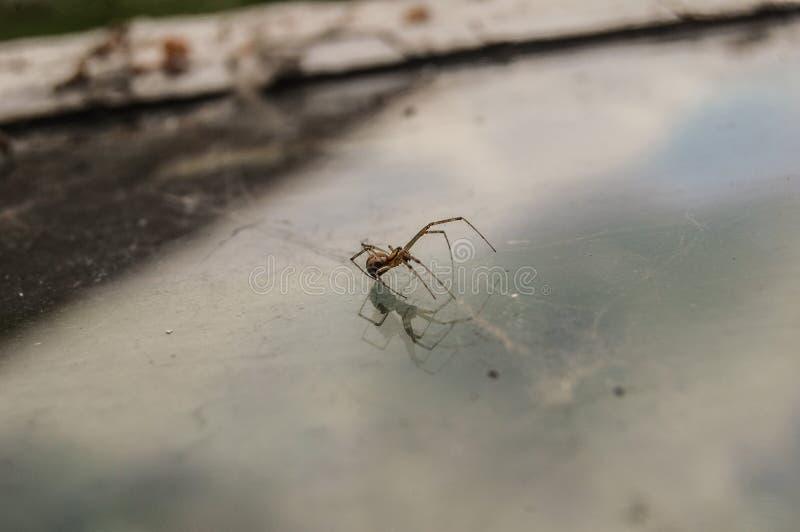 Araña sobre el vidrio fotos de archivo