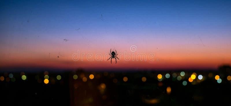 Araña sobre la ciudad foto de archivo
