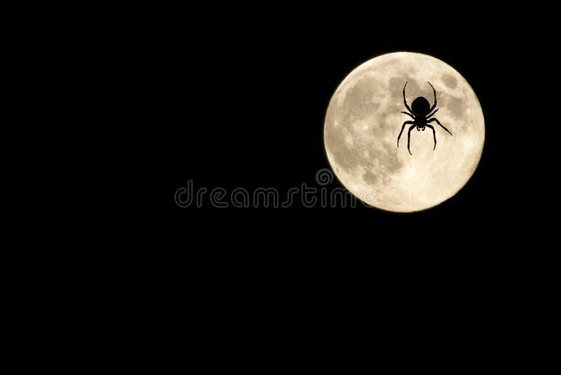 Araña sobre la luna fotografía de archivo libre de regalías