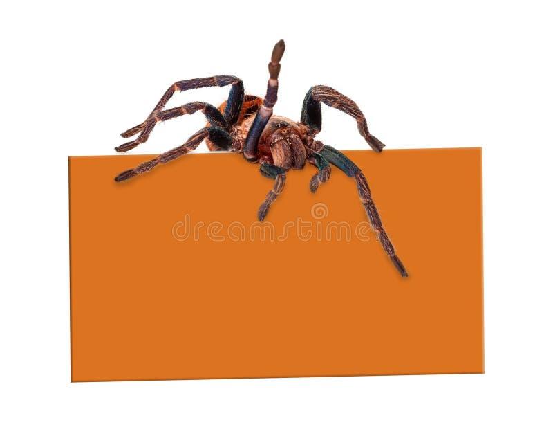 Araña sobre muestra en blanco fotos de archivo