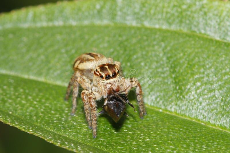 Araña tailandesa fotos de archivo