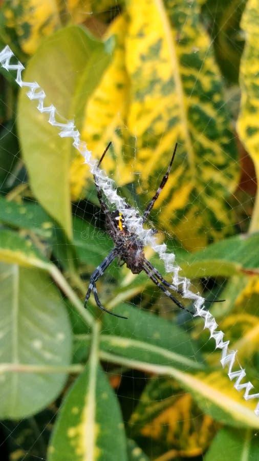 Araña tropical imagen de archivo libre de regalías
