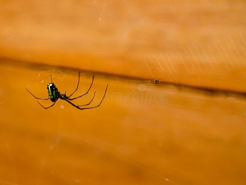 Araña verde fotos de archivo libres de regalías