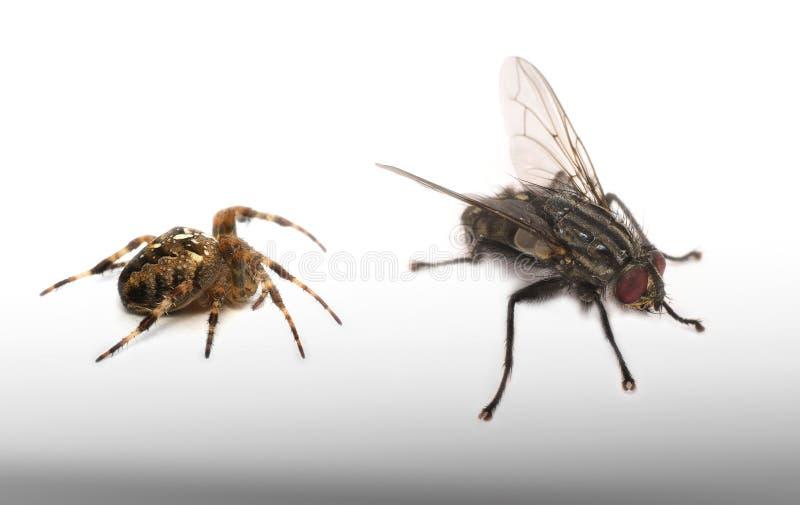 Araña y mosca - modo macro foto de archivo