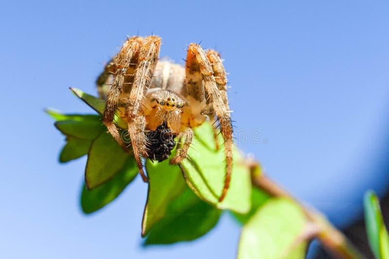 Araña y telaraña en el jardín de la casa foto de archivo