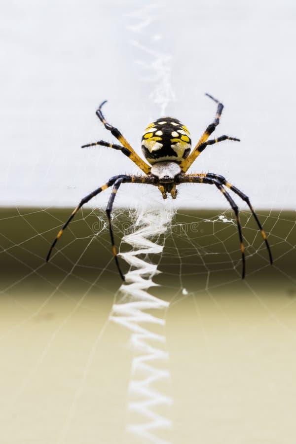 Araña y web de la cremallera imagen de archivo