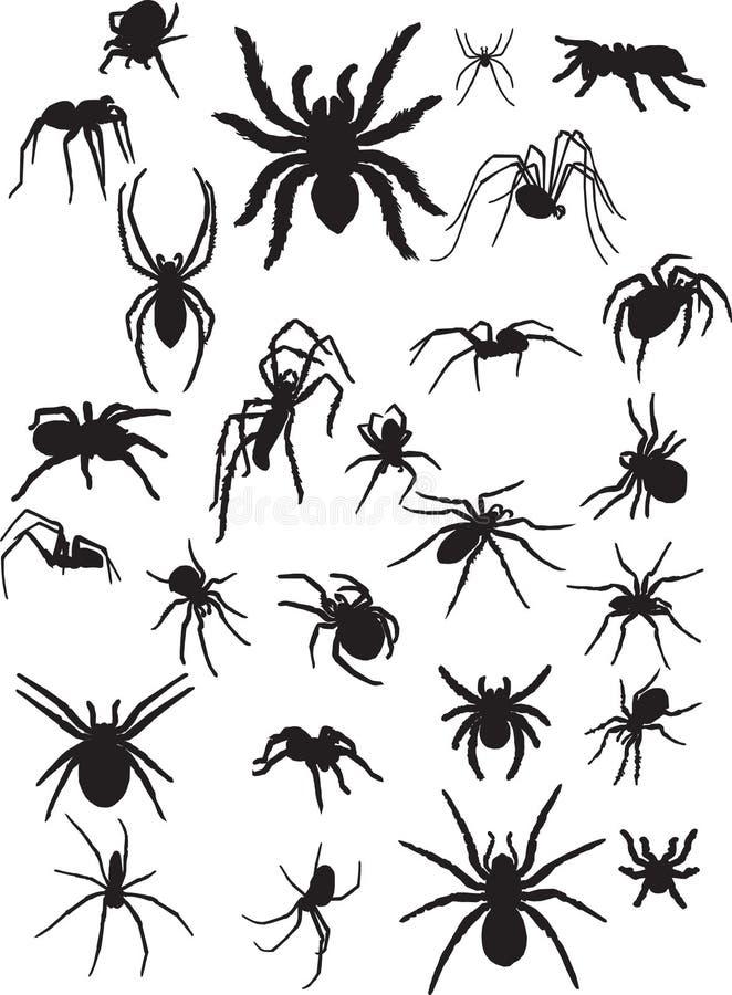 Arañas stock de ilustración