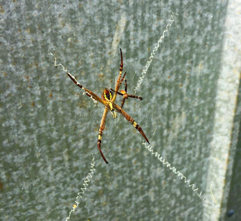 Arañas coloridas en web foto de archivo libre de regalías
