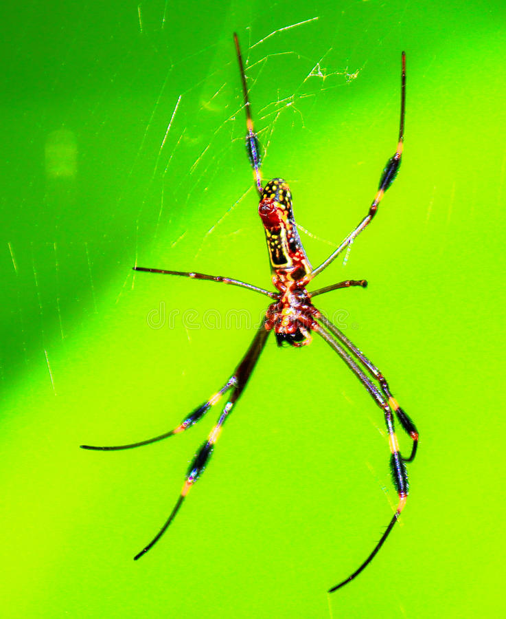 Arañas en caminar la trayectoria - Costa Rica 2 imágenes de archivo libres de regalías