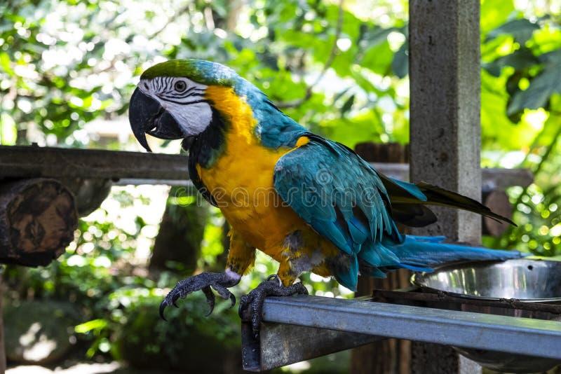 Ara鹦鹉在热带 库存照片