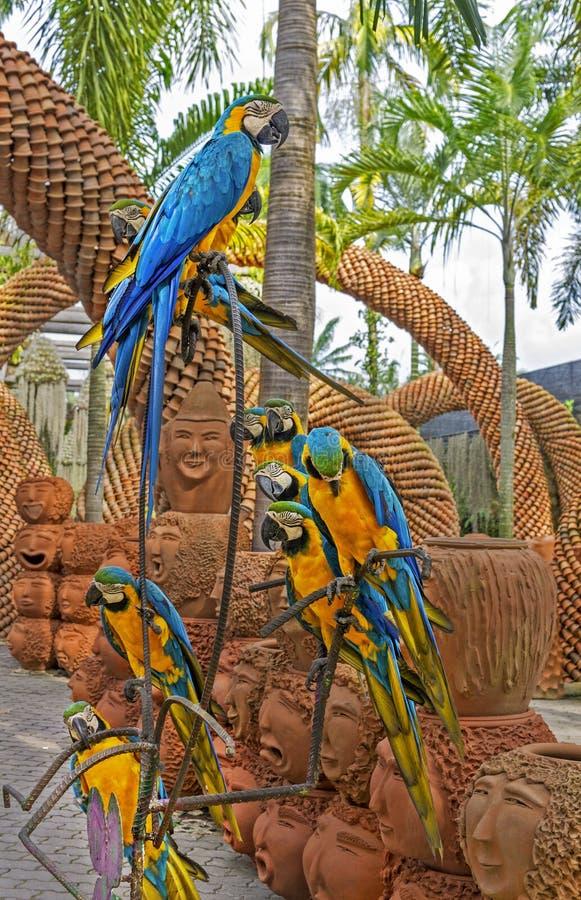 Ara bleu et jaune (perroquets d'Arara) dans le jardin botanique tropical de Nong Nooch, Pattaya, Thaïlande image stock
