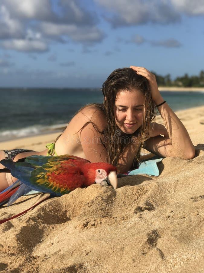 Ara på stranden royaltyfri fotografi