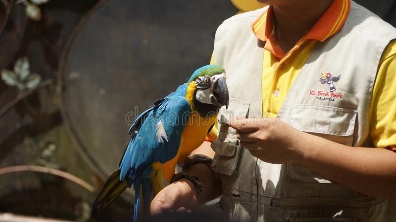Ara of papegaaiparkiet stock fotografie