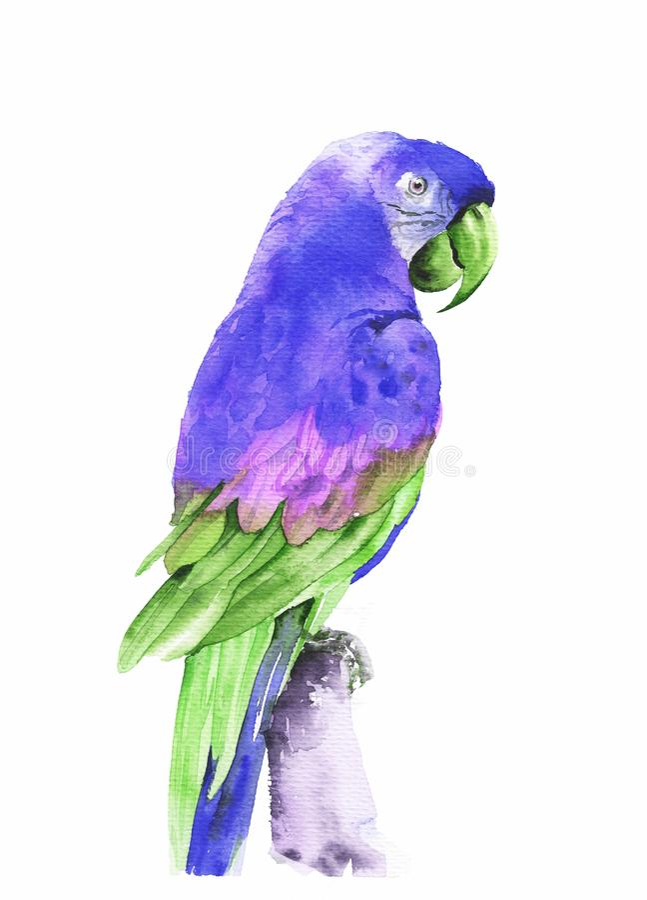 Ara tropicale volante del pappagallo Illustrazione disegnata a mano dell'acquerello immagini stock