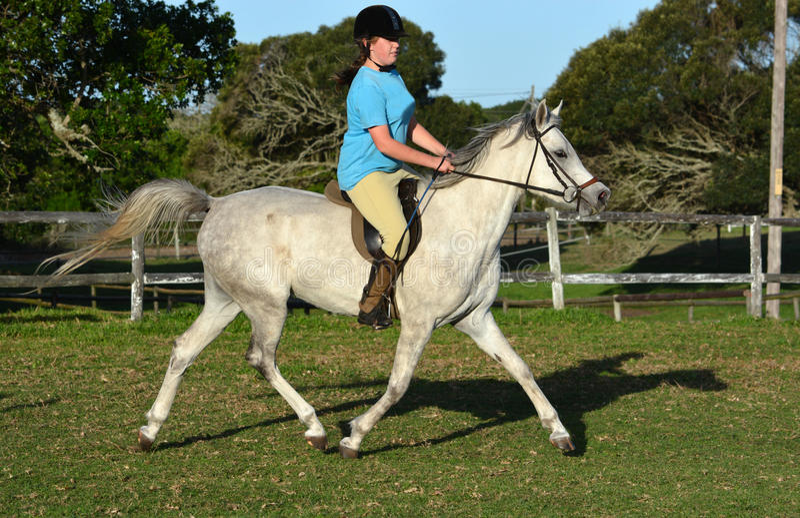 Arab horse with rider stock image. Image of pony ...