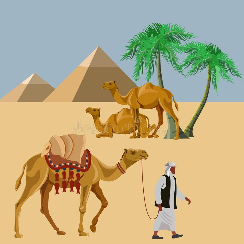 Arab man with a camel in the desert. Against the background of Egyptian pyramids. Vector illustration stock illustration