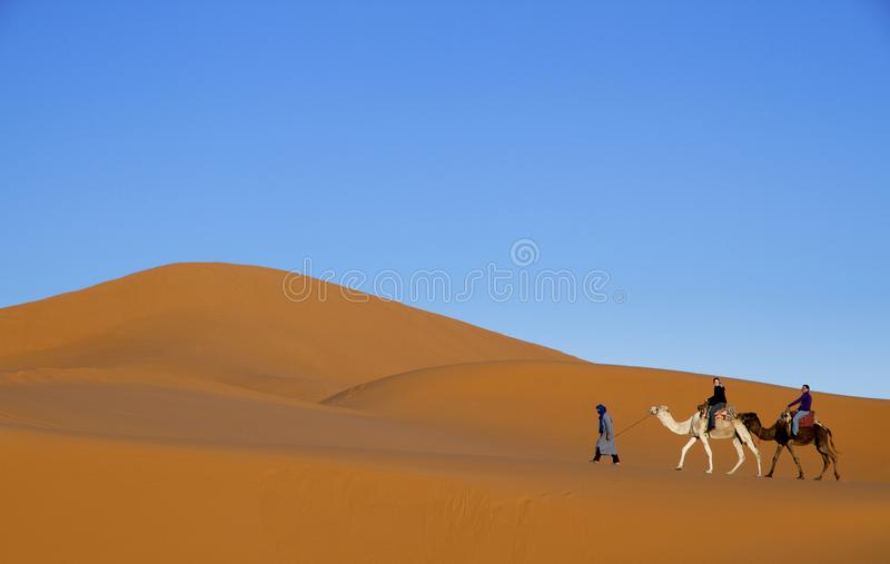 Arab man leading tourists on two camels along desert sand dunes with blue sky background stock photography