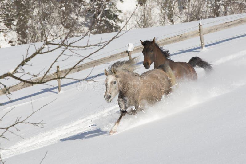 Araber im Schnee fotografie stock libere da diritti