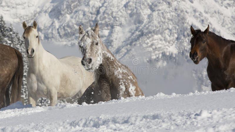 Araber im Schnee fotografia stock