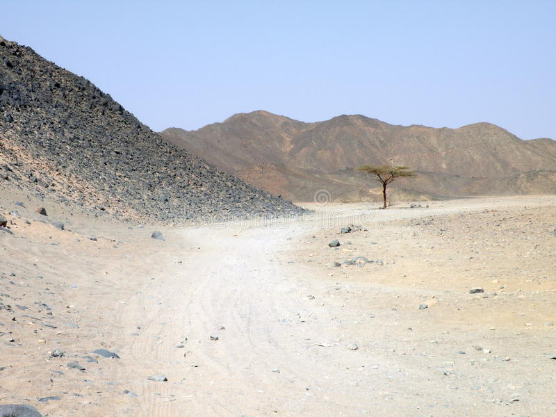 Arabian desert royalty free stock image