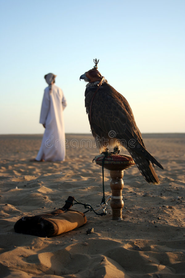 Arabian Falcon. An Arab Man with his Falcon in the Desert, Dubai UAE