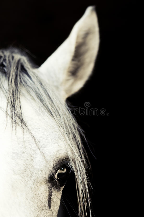 Arabian Horse Eye. Shallow depth of field stock photos