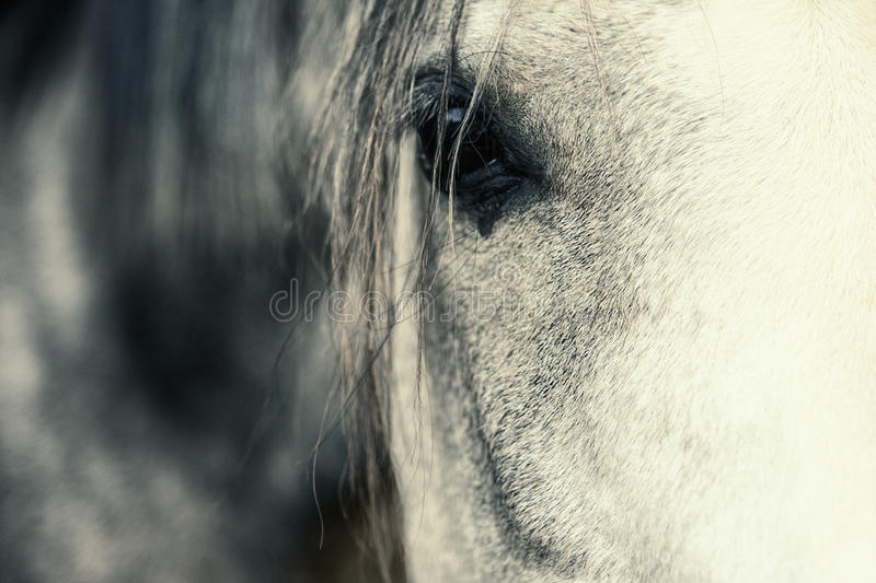Arabian Horse Eye. Shallow depth of field royalty free stock photography
