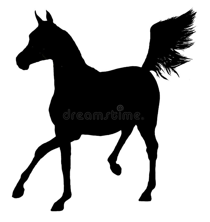 Arabian Horse Silhouette Isolated royalty free stock photo