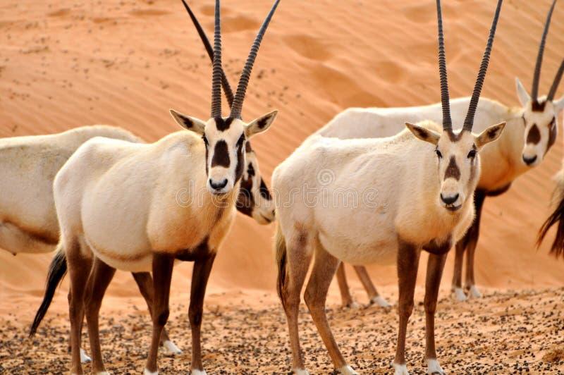 Wildlife animals royalty free stock image