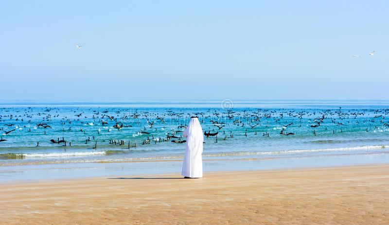 Arabic man photographing birds in the sea. Arabic man photographing flock of birds in the sea royalty free stock photos