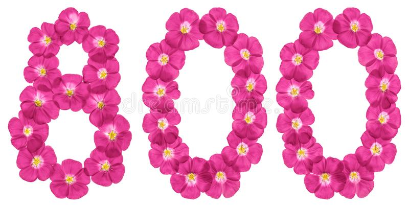 Arabic numeral 800, eight hundred, from pink flowers of flax, isolated on white background.  stock image