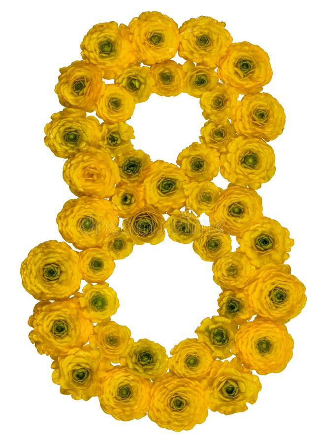 Arabic numeral 8, eight, from yellow flowers of buttercup, isolated on white background royalty free stock photography
