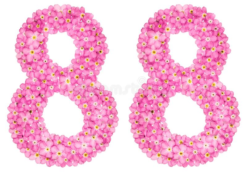 Arabic numeral 88, eighty eight, from pink forget-me-not flowers. Isolated on white background royalty free stock image