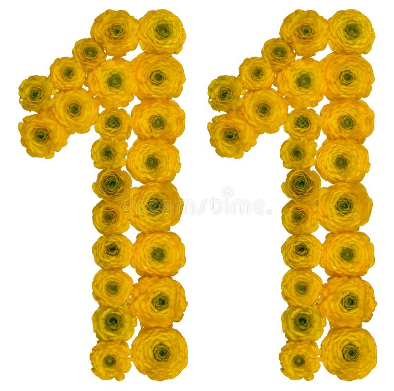 Arabic numeral 11, eleven, rom yellow flowers of buttercup, isolated on white background. Arabic numeral 11, eleven, from yellow flowers of buttercup, isolated stock images