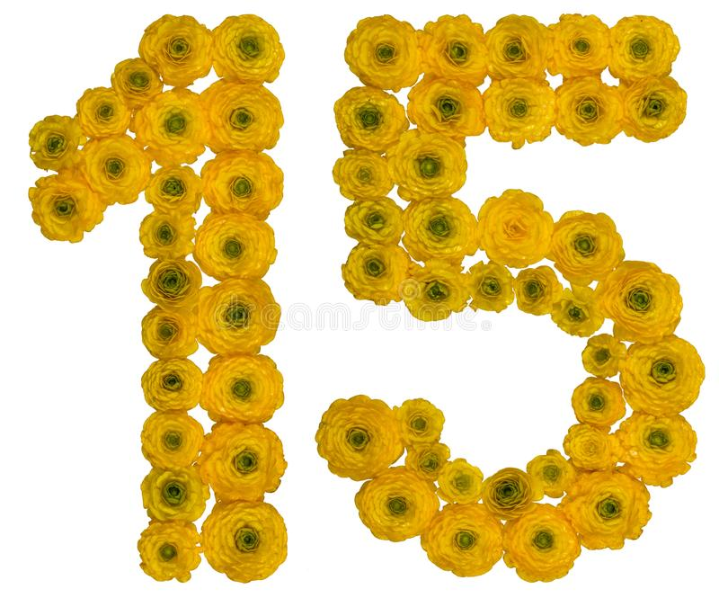 Arabic numeral 15, fifteen, from yellow flowers of buttercup, i. Solated on white background stock photography
