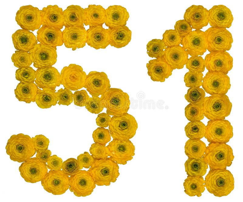 Arabic numeral 51, fifty one, from yellow flowers of buttercup,. Isolated on white background royalty free stock photos