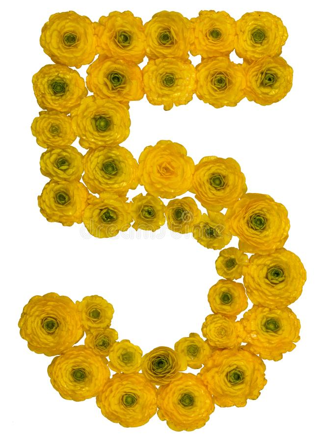 Arabic numeral 5, five, from yellow flowers of buttercup, isolated on white background stock images
