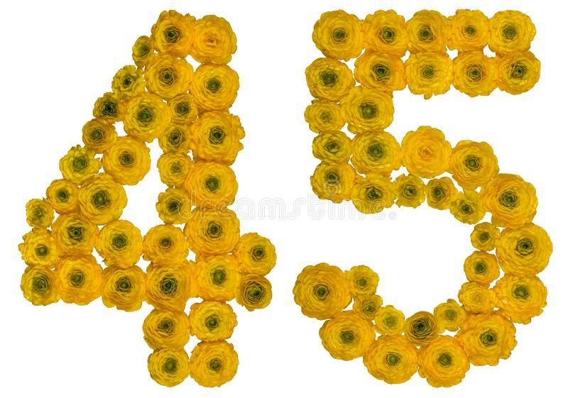 Arabic numeral 45, forty five, from yellow flowers of buttercup, isolated on white background stock image