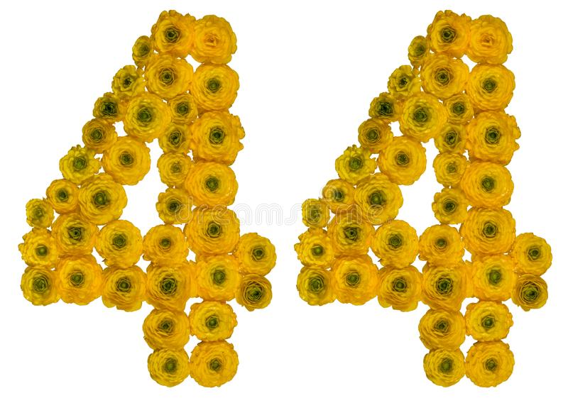Arabic numeral 44, forty four, from yellow flowers of buttercup, isolated on white background stock image