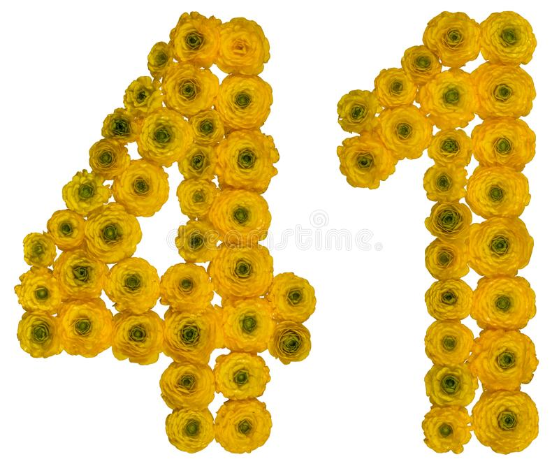 Arabic numeral 41, forty one, from yellow flowers of buttercup,. Isolated on white background stock image