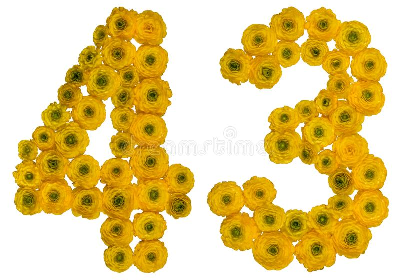 Arabic numeral 43, forty three, from yellow flowers of buttercup. Isolated on white background royalty free stock photos